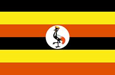 Uganda und die Berggorillas